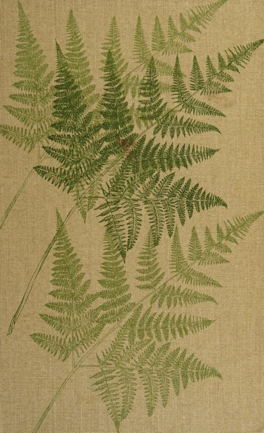 Pacific Northwest ferns and their allies by Thomas Mayne Cunninghame Taylor